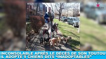 """Inconsolable après le décès de son toutou, il adopte 9 chiens dits """"inadoptables"""" ! Tout de suite dans la Minute Chien #204"""