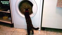 Crazy funny Cats vs washing machine imaginary enemy Cats Compilation 2015