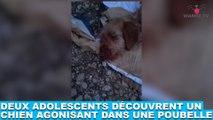 Deux adolescents découvrent un chien agonisant dans une poubelle ! Tout de suite dans la Minute Chien #205