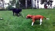 لقطات مضحكة للحيوانات