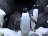 Penguins Penguins Penguins