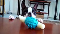Puppies Desperately Trying To Reach their Toys
