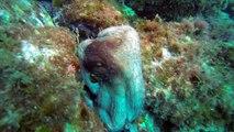 Plongée côte bleue -  Mars 2016