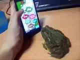 Frog Tries To Eat Fly Off Phone Game-Amazing Video-Funny Videos-Whatsapp Videos-Prank Videos-Funny Vines-Viral Video-Funny Fails-Funny Compilations-Just For Laughs