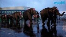 On To The Elephant Farm: Ringling Bros. Circus Retires Elephants