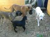 Bossa et ses copines