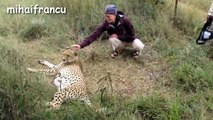 Lions, Tigers And Cheetahs Also Like Cuddling - Big Cats Compilation