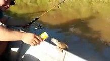 Un poisson boit de la bière au Brésil