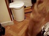 Mon chaton coquin qui joue avec sa petite canne à pêche LOL