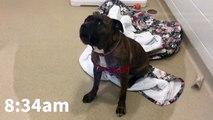 Cet adorable chien a eu une vie tourmentée ! Découvrez son histoire ! 1