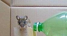 Tutoriel pour créer un piège à souris avec une bouteille en plastique