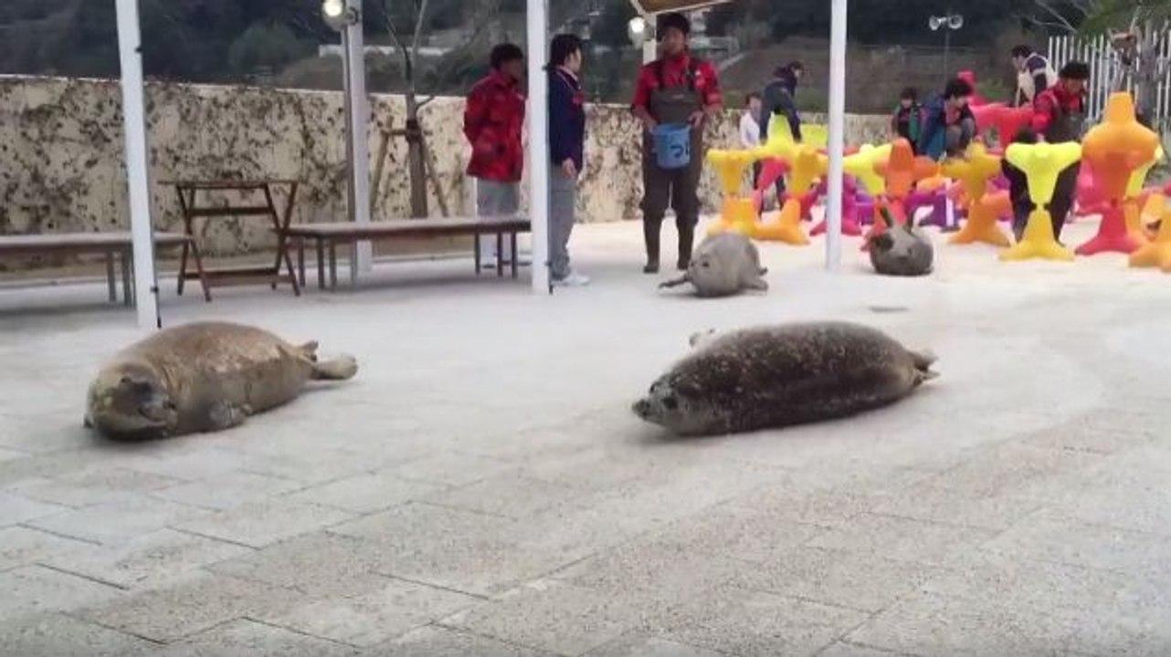 ней прыгающие тюлени гифка истории