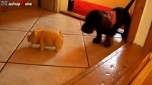 Puppies Barking Compilation Cute Dog Barking Videos [NEW]