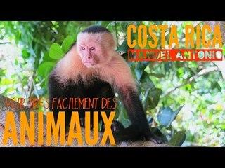 COSTA RICA : le parc pour voir FACILEMENT des animaux et de très PRÈS !