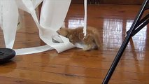 Kittens and Toilet Paper Bad Decision - Best Cats Viral Videos
