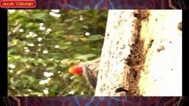 ANGRY BIRD Attacks Tiger, Snake, Lizard, Man ► Amazing animal attack ► Craziest Animal Fights
