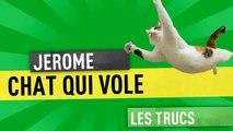 Chat qui vole ! (la ferme Jérôme) #humour