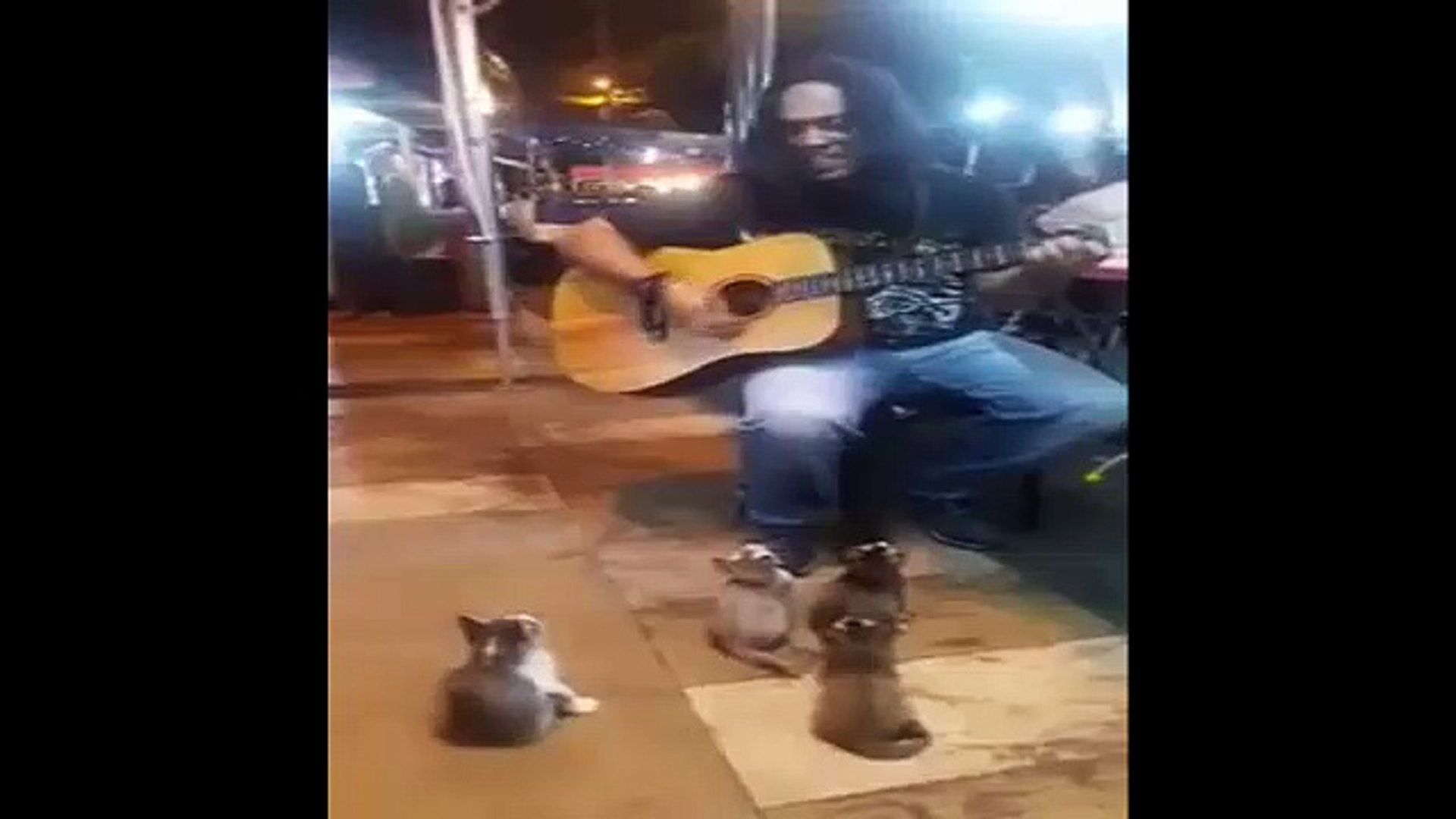 Cute Audience Cats Watching and Enjoying Street Musician Performance