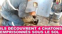 Ils découvrent 4 chatons emprisonnés sous le sol ! Tout de suite dans la Minute Chat #210