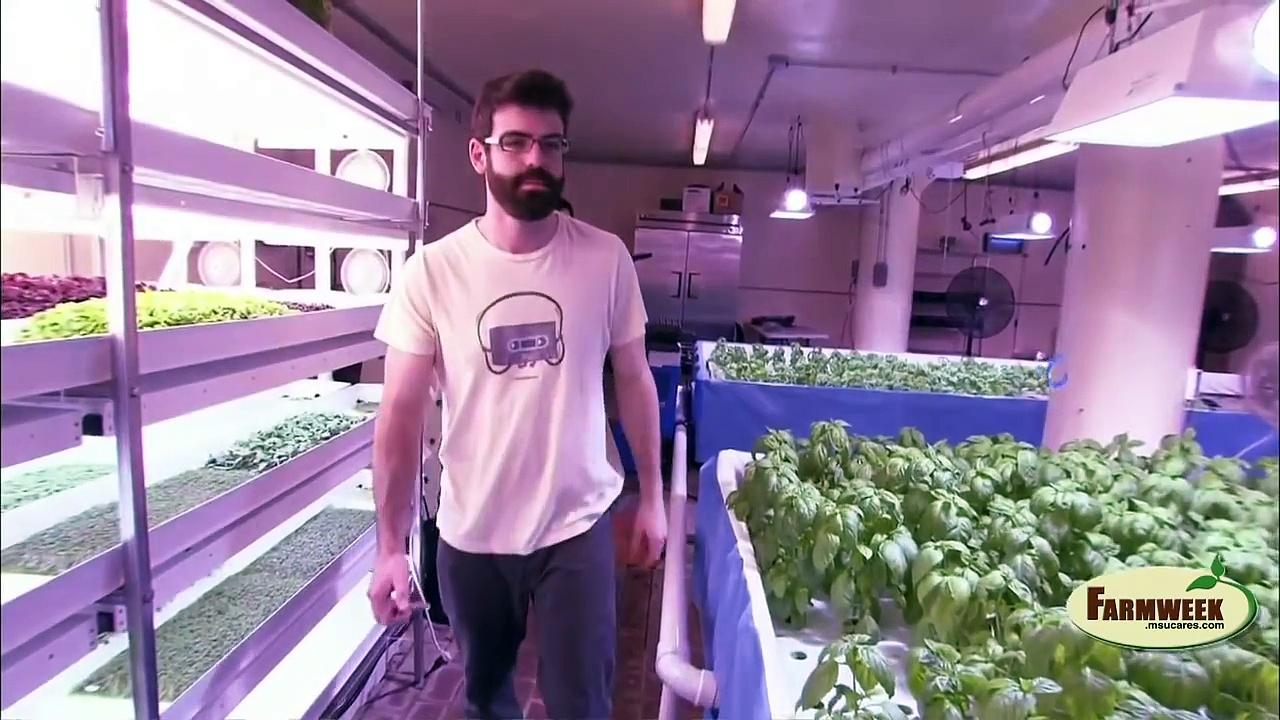 Greens and Gills Indoor aquaponics farming
