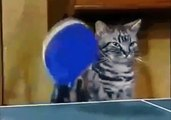 CATS WHO LOVE PING PONG