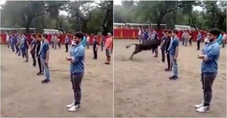 Professor juntou 40 alunos para provar que touros só atacam se forem atacados