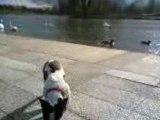 arwen et les canards