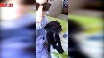 Jovem chamado (Gonçalo Carter) pendura cão na janela,e o caso já chegou a PSP E GNR