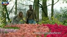 Rainha das Flores (SIC) - Trailer oficial da novela