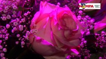 NAMPA: WHK hats and Roses Story 16 Oct 2015 hd