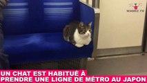 Un chat est habitué à prendre une ligne de métro au Japon ! Découvrez-le dans la Minute Chat #213