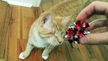 Ce chat aveugle est trop mignon lorsqu'il joue comme un chat parfaitement voyant