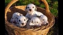 10 chiens adorables