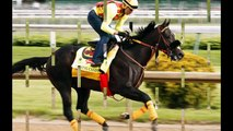 Kentucky Derby 2016 - Meet The Thoroughbred Horses Racing In The Competition