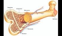 Human body bones for all students __ Body Scaleton Bones __ Head Bones.