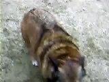Aunt Carols Dogs