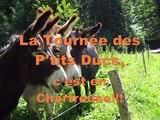 Avec mon âne #1... Randonnée en famille avec des enfants dans le Parc de Chartreuse.