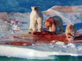 Grizzly Bear vs Polar Bear Real Wild Brutal Fight!! Insane Animal Fight!!
