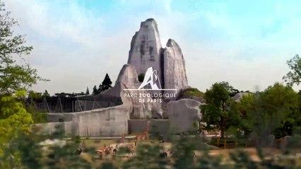 Le Parc Zoologique de Paris, un monde à explorer