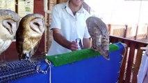ANIMALES CHISTOSOS Y GRACIOSOS #01 _ Vídeos de risa de animales (Perros, Gatos y animales salvajes)