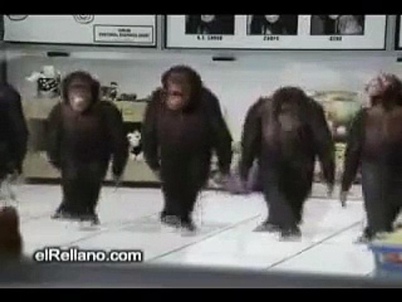Happy Birthday How Monkey Sing Video Dailymotion