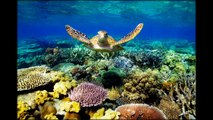 Great Barrier Reef  Australia   photos 29