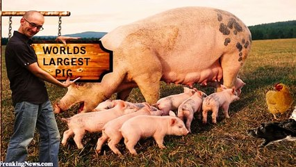 World's 10 biggest animals of All Time