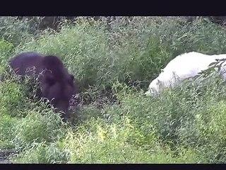 15 CRAZIEST Animal Fights Caught On Camera - Lion,Buffalo,crocodile,Elephant, Bear,Lion