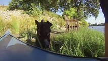Aug 22, 2014 4th kayak trip with dogs