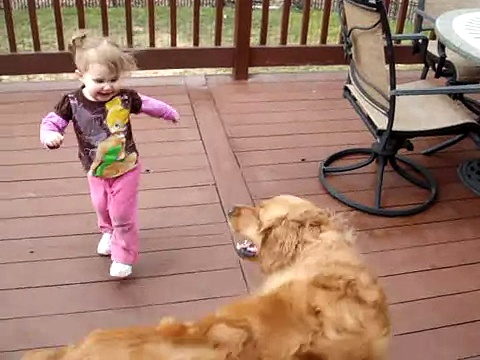 Almost-2-Year-Old (25 lbs) Chases Golden Retriever (87 lbs)
