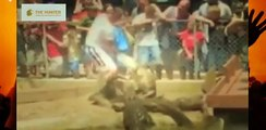 Biggest wild animal fights | Most Amazing Wild Animal Attacks #7 | When Animals Fight Back