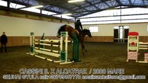 JUMPING HORSES FOR SALE-28.CASSINI II. X ALCATRAZ