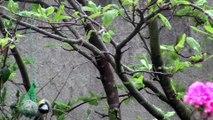 Oiseaux de nos jardins - 2ème partie