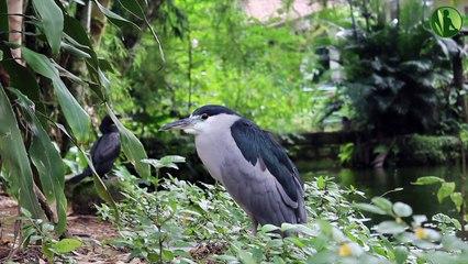 2 HORAS com Sons de Pássaros, Natureza e Água Corrente